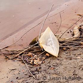 Litter-November 18, 2012-DSC_0721 vSmall v2jh